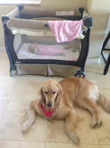 Our dog watching over the baby